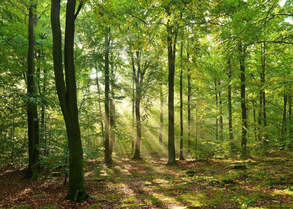 Queen Elizabeth Country Park