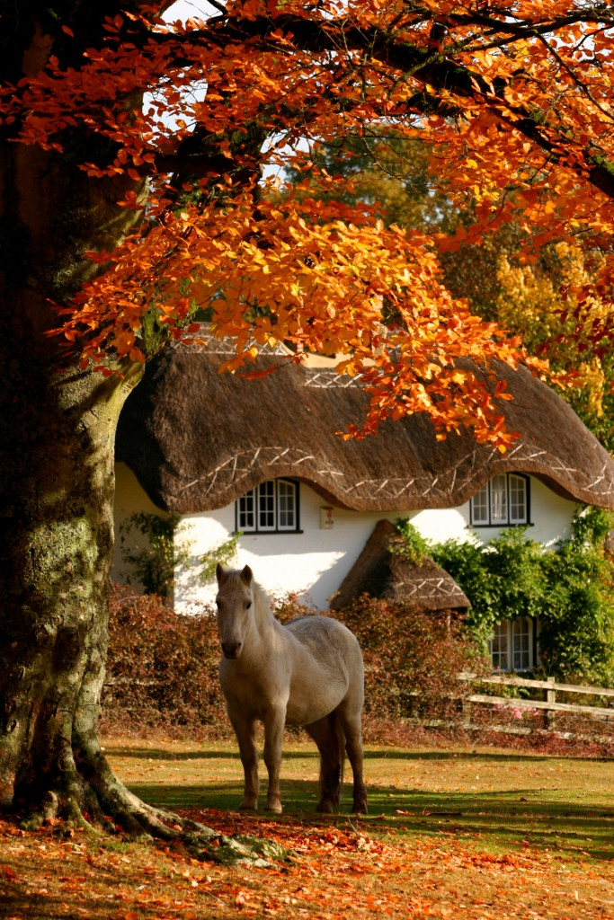 Pony, Swan Green in the New Forest